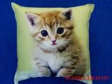 Fotopolštářek - Kotě na zeleném